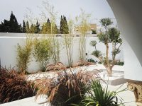 OM-Paysage : Villa Hammamet : Paysage : Tunisie : Paysagiste 3